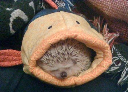 cutest-hedgehog.jpg