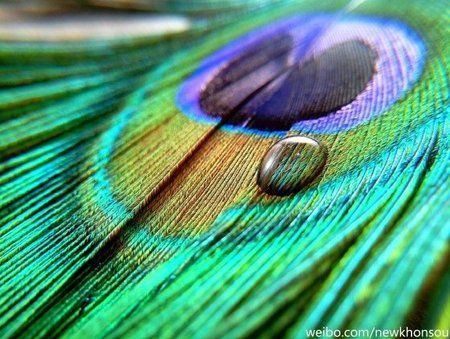 Meizu-MX6-Peacock.jpg