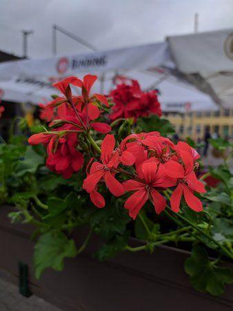 Blume GCam.jpg
