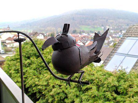 Vogel GCam.jpg