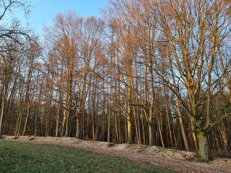 S21U_Wood_Morning.jpg