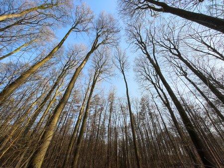 Mi11U_WW_Tree.jpg