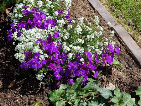 S21U_Flowerbed_3x.jpg