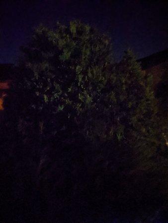 PXL_20210731_213352526.NIGHT.jpg