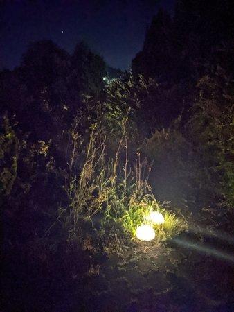 PXL_20210731_213500109.NIGHT.jpg